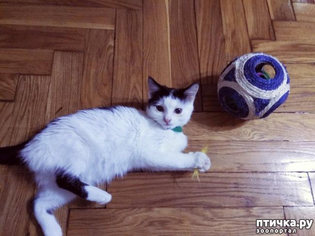 фото 3: Как вытащить шило из попы?))