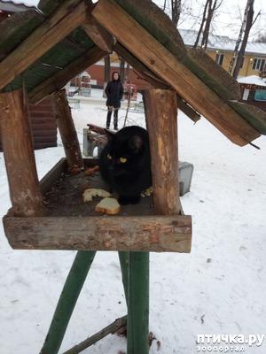 фото: Покормите птиц зимой)))
