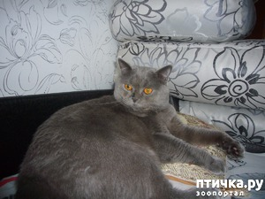 фото: Новая лежанка для моего Хани