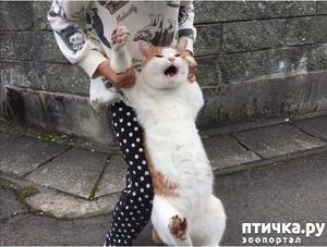 фото: Отпусти, я и м врежу!