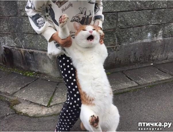 фото 1: Отпусти, я и м врежу!