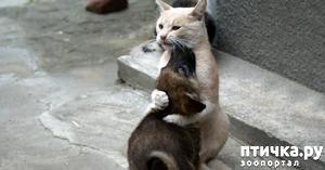 фото: Кот по прозвищу Папа Тереза