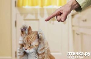 фото: Стоит ли наказывать кота?