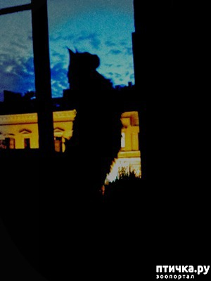 фото: Ночь