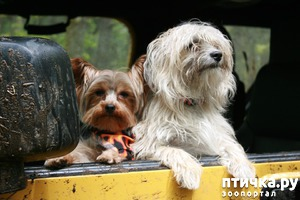 фото: Путешествуем с собакой: где жить в чужом городе?