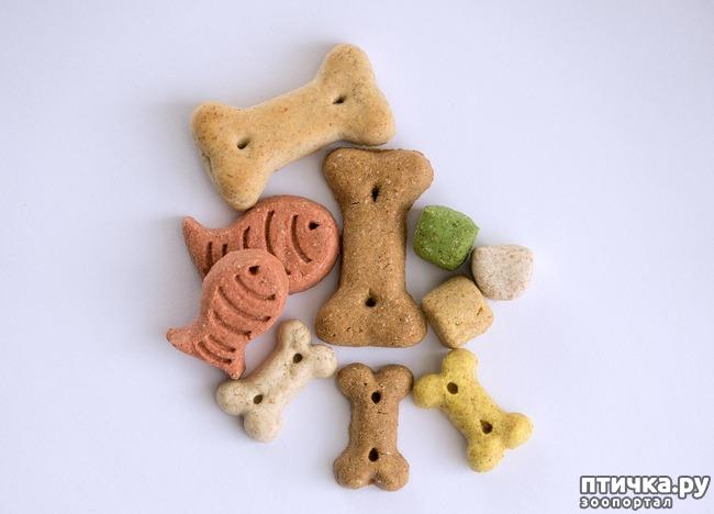 фото 4: Можно ли давать собакам сладости?