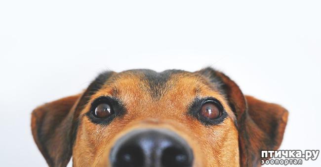 фото 1: Можно ли давать собакам сладости?