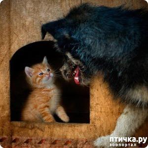 фото: Как кошка с собакой котят делили))