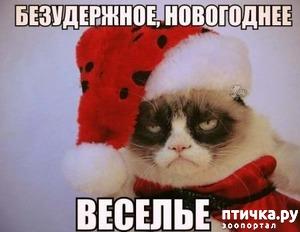 фото: Котоматрица: Кот и Новый год-2!