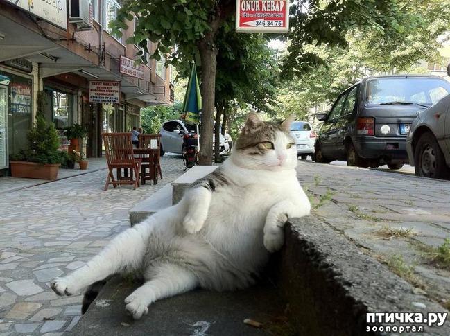 фото 1: 15 правил жизни настоящего кота