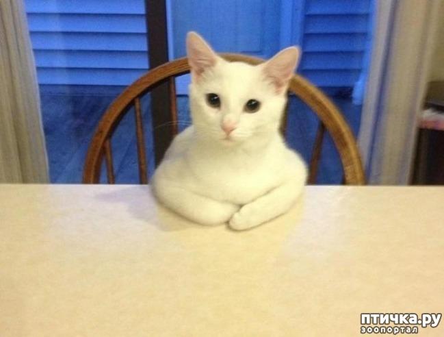 фото 4: 15 правил жизни настоящего кота