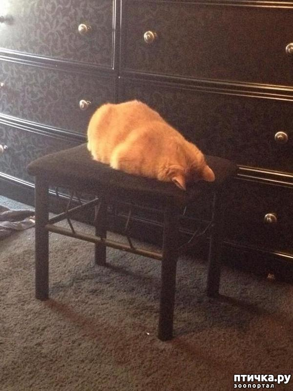 фото 5: 15 правил жизни настоящего кота
