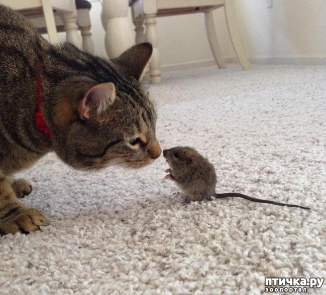 фото 7: 15 правил жизни настоящего кота