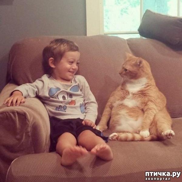 фото 8: 15 правил жизни настоящего кота