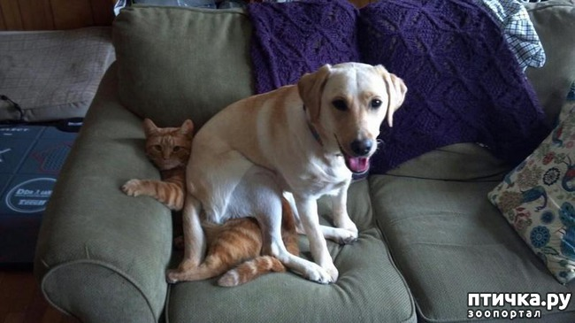 фото 9: 15 правил жизни настоящего кота