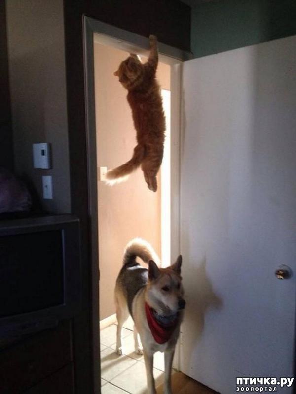 фото 10: 15 правил жизни настоящего кота
