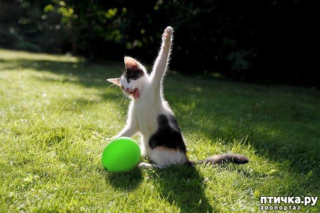 фото 11: 15 правил жизни настоящего кота
