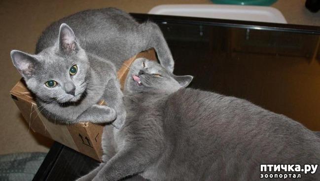 фото 12: 15 правил жизни настоящего кота