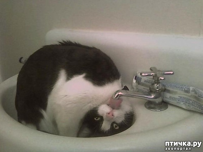 фото 13: 15 правил жизни настоящего кота
