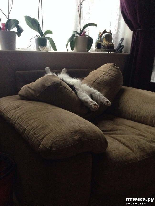 фото 14: 15 правил жизни настоящего кота