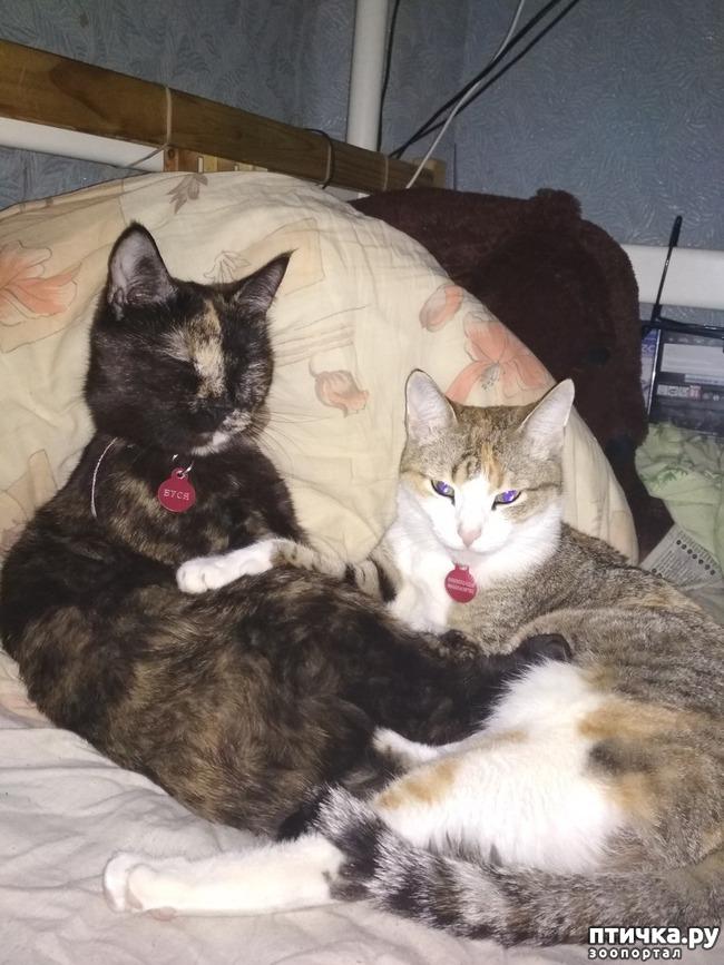 фото 1: Кошачья привязанность.