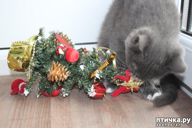 фото 5: Знакомство с елочкой