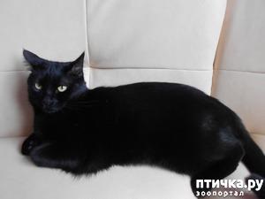 фото: Про Сема и Тома котов в семье моего сына
