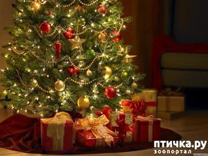 фото: Новогоднее!!! Стихотворная тема)