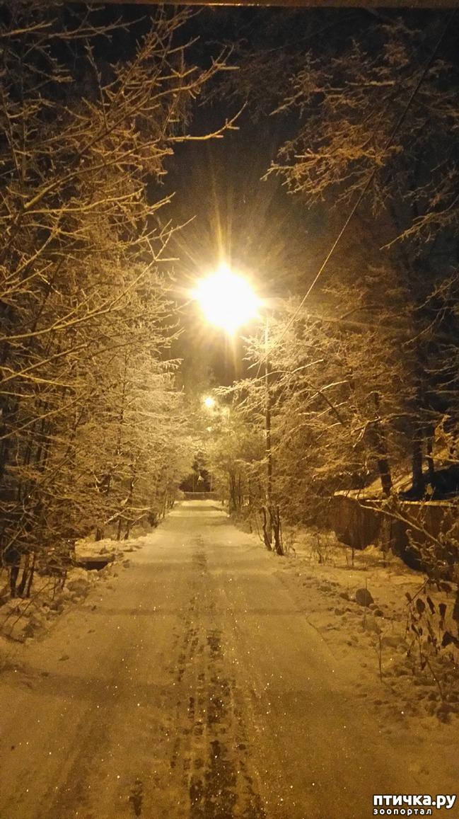 фото 1: Предновогоднее. Теплый свет фонарей и холодный - луны.