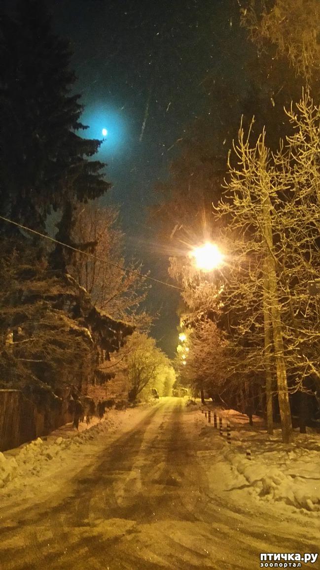 фото 3: Предновогоднее. Теплый свет фонарей и холодный - луны.