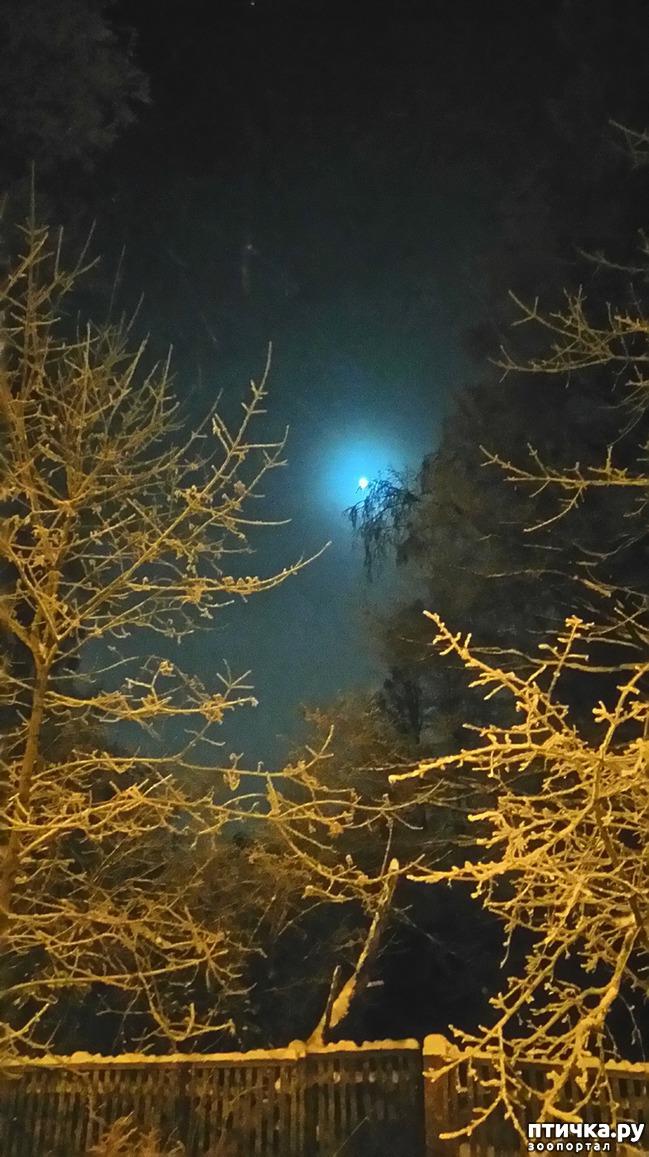 фото 4: Предновогоднее. Теплый свет фонарей и холодный - луны.