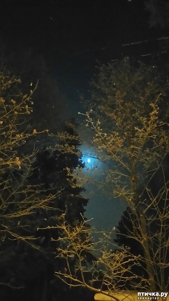 фото 5: Предновогоднее. Теплый свет фонарей и холодный - луны.