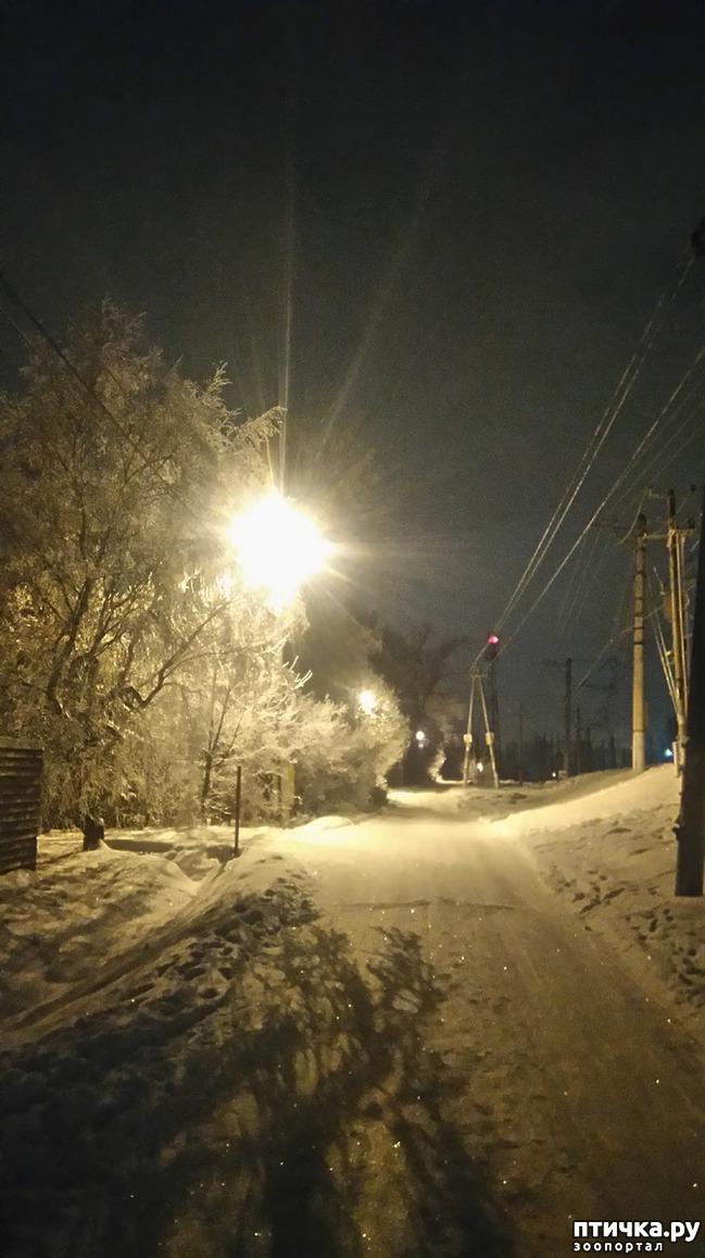 фото 6: Предновогоднее. Теплый свет фонарей и холодный - луны.