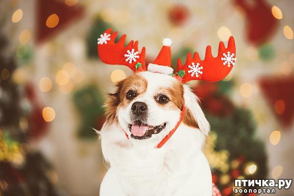 фото 1: Что подарить любимому питомцу на новый год?))