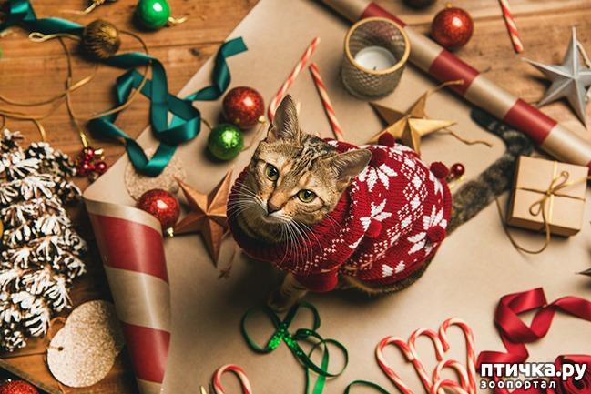 фото 2: Что подарить любимому питомцу на новый год?))
