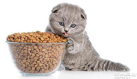 фото 3: Вреден ли сухой корм для кошек: отзывы ветеринаров.