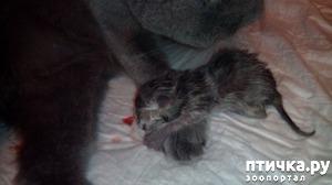 фото: Как помочь кошке во время родов