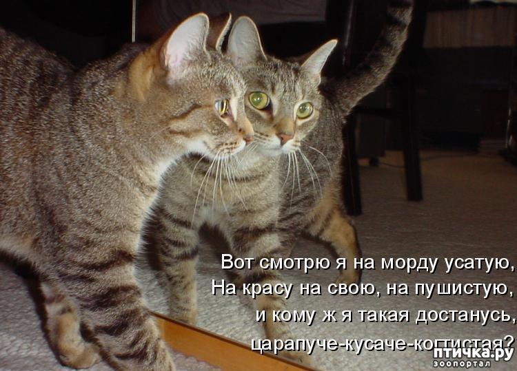 Картинки с приколами животных и надписями онлайн программа, поздравления днем