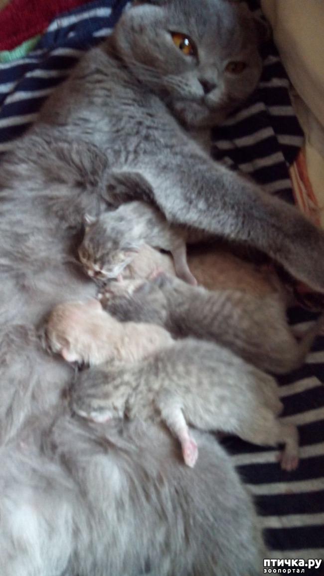 фото 9: Как помочь кошке во время родов