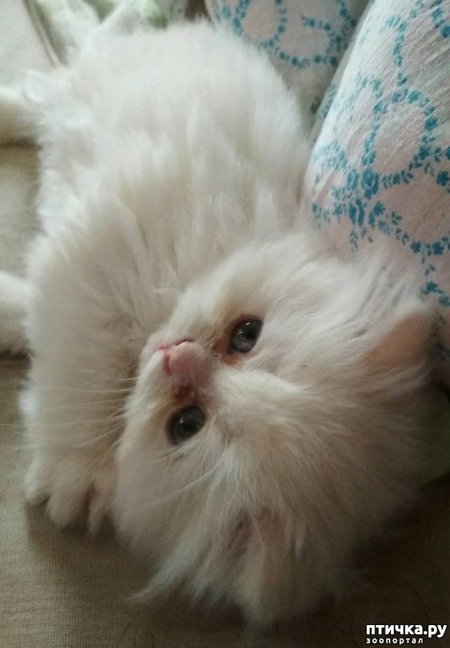 фото 2: Как быть, если ваш кот глухой?