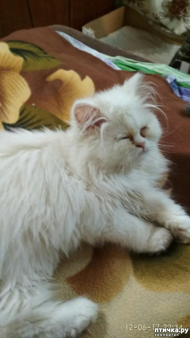 фото 3: Как быть, если ваш кот глухой?