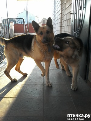 фото: Игра с собакой в прятки и не только)))
