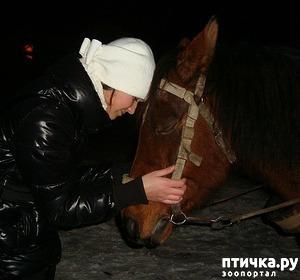 фото: История от том, как мы помогли бедной лошадке...