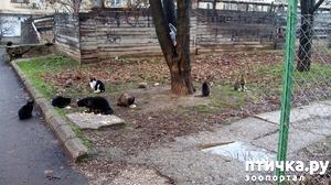 фото: Как вы можете помочь бездомным котятам и кошкам