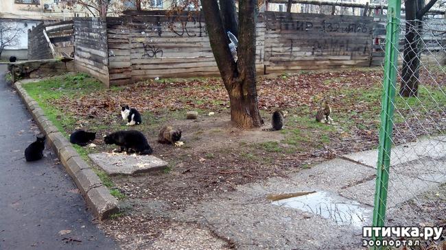 фото 1: Как вы можете помочь бездомным котятам и кошкам