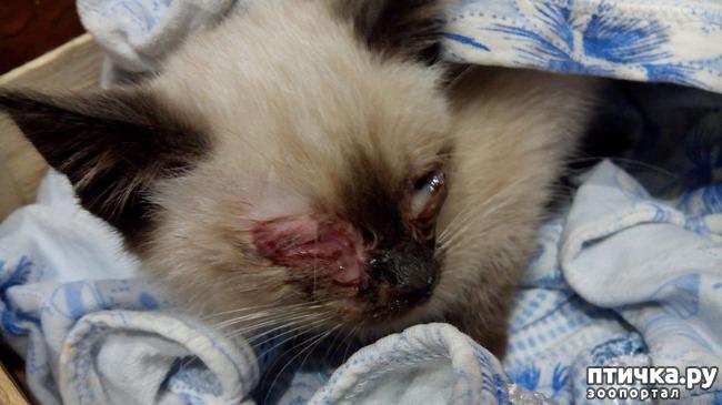 фото 2: Как вы можете помочь бездомным котятам и кошкам