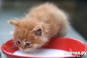 фото: Чем нельзя кормить кошек.