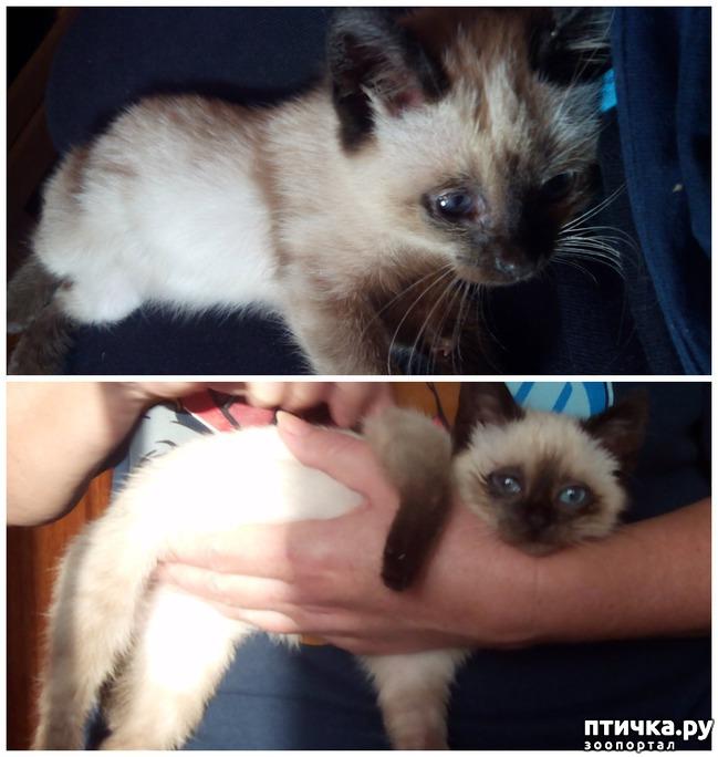 фото 3: Как вы можете помочь бездомным котятам и кошкам