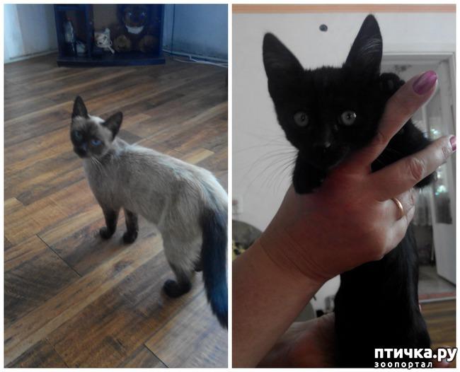 фото 4: Как вы можете помочь бездомным котятам и кошкам
