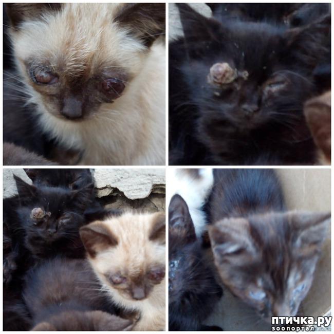 фото 5: Как вы можете помочь бездомным котятам и кошкам